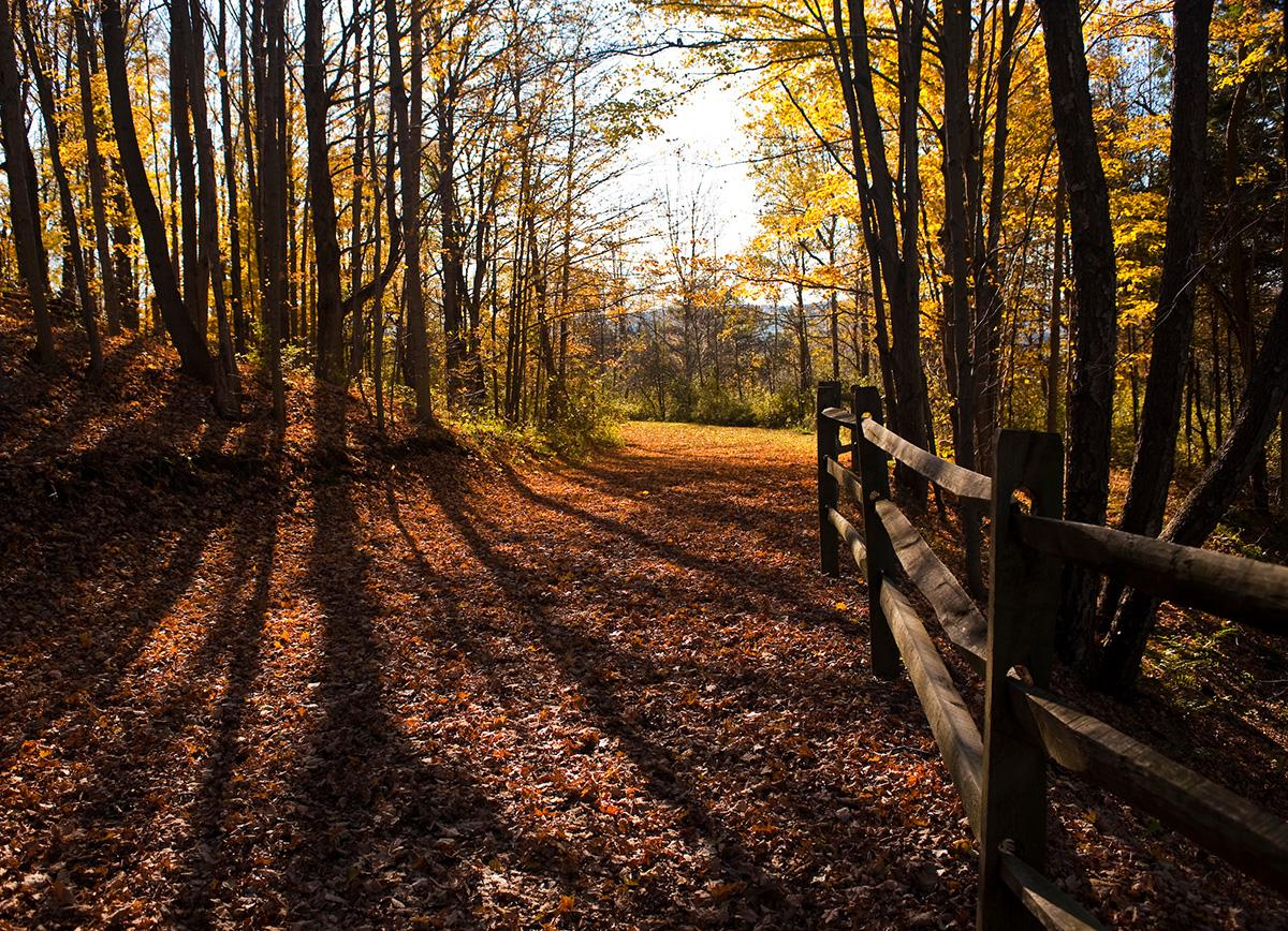 A walking path through Colgate forested lands blanked in leaves during autumn