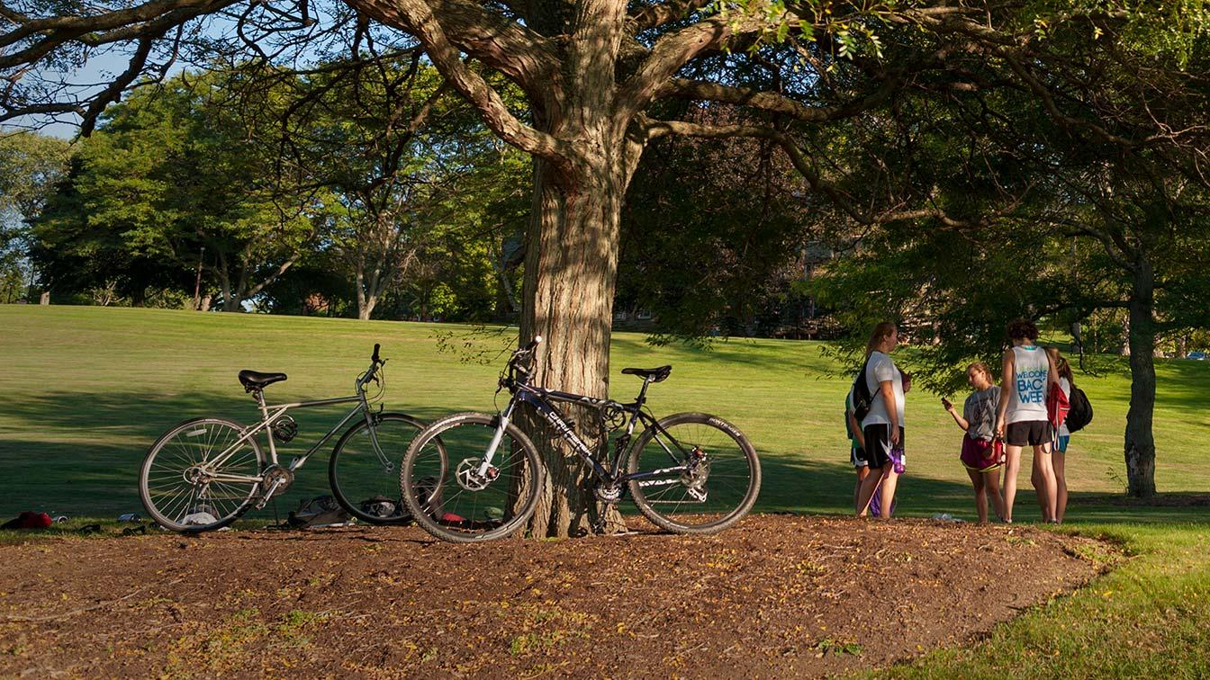 Two bicycles parked near a tree as students talk nearby
