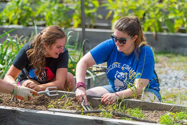 Colgate students participate in the afternoon of service by working in the community garden.
